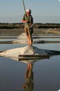 Man gathering salt on the Guérande salt marsh